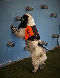 Nesearbeide er både spennende og inspirerende og passer for alle typer hunder. Det bygger og styrker kontakten mellom hund og fører og er en god måte å holde hunden i form både fysisk og mentalt. Plass til 6 Ekvipasjer m/hund Pris m/hund: kr 1250,- for medlemmer. Ikke medlemmer kr. 1650,- Første kurskveld er uten hund og varer fra 18 - 19.30 Dag 2 og 3 varer fra 10-16 og er med hund. Instruktør på kurset: Grete Brevig Kursavgift betales til konto 0533 05 45145 innen første kurskveld. Påmelding sendes på mail til grbrev@gmail.com og er bindende da vi har få plasser. Mailen skal inneholde hundens navn, rase, alder og hva dere har holdt på med. Skulle det bli stor interesse for kursene setter vi opp flere kurs.